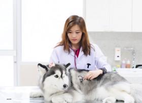 Veterinarija